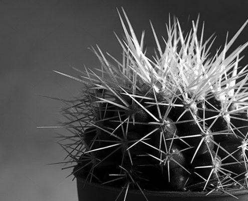 cactus sandra bruyns